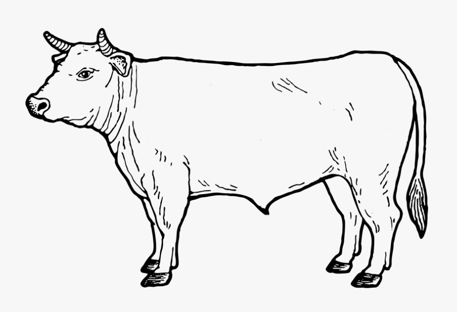 Drawing Cow Easy Transparent Png Clipart Free Download - Miller And Carter Cow, Transparent Clipart