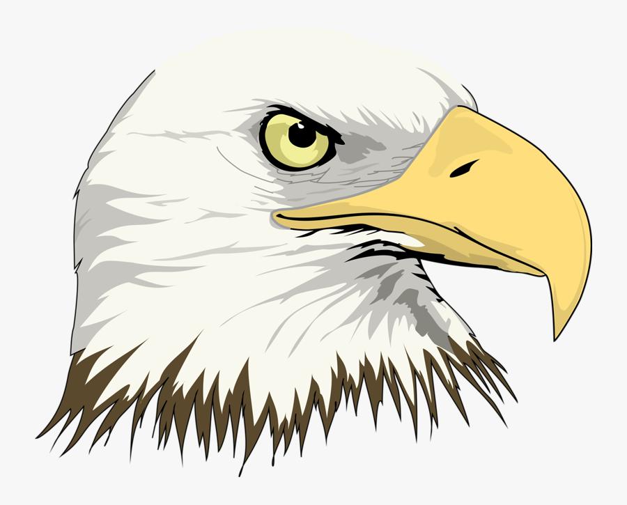 Bald Eagle Drawing Clip Art - Cartoon Eagle Head Png, Transparent Clipart