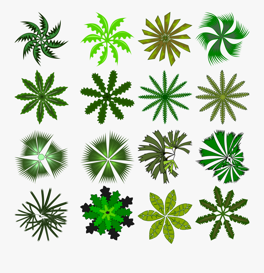 Tree Top Png Awesome - Small Plants Png Top View, Transparent Clipart