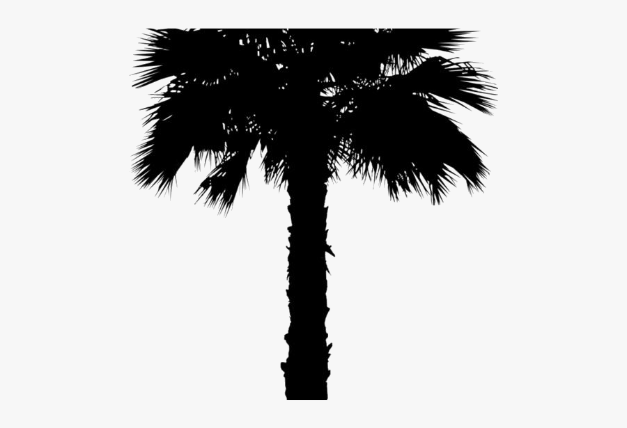 Coconut Tree Png Clipart Image For Download - Washingtonia Palm Tree Png, Transparent Clipart