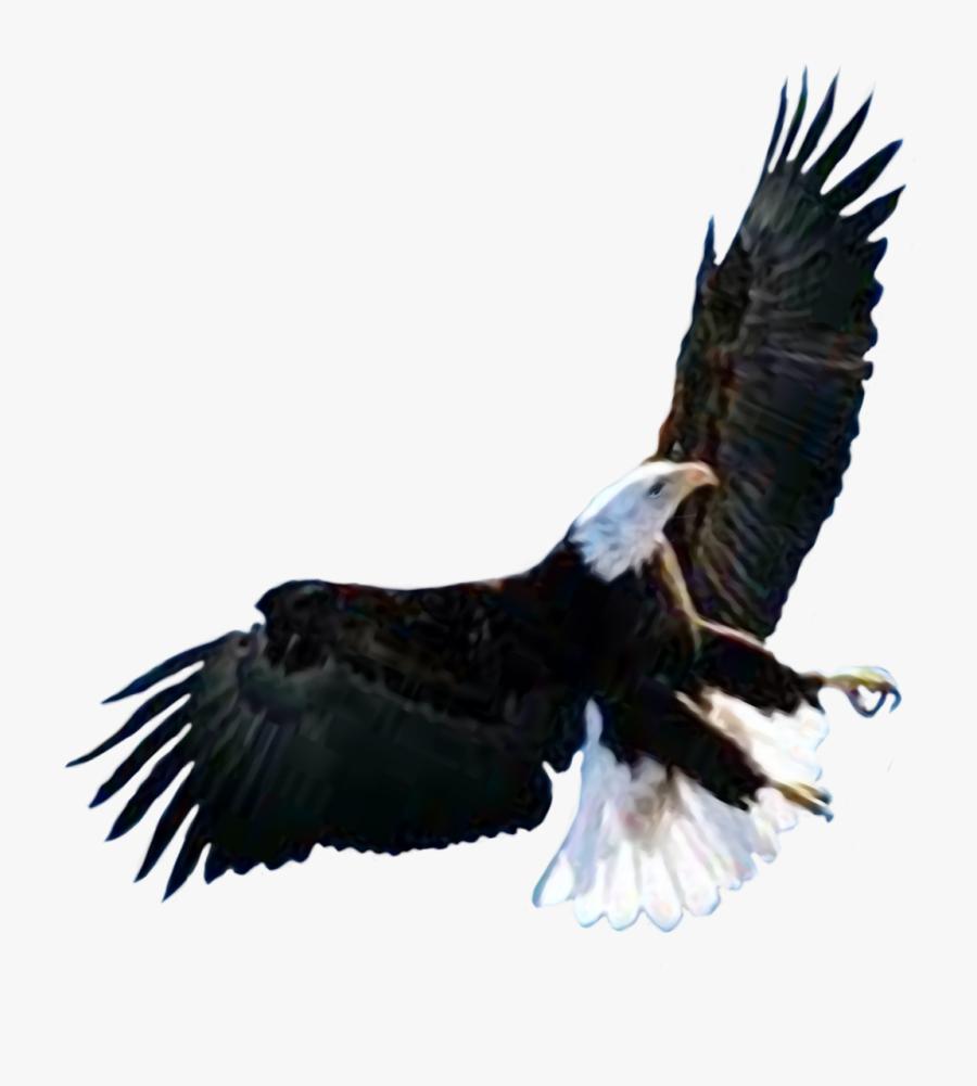 Transparent Raptor Bird Clipart - Attucks Middle School, Transparent Clipart