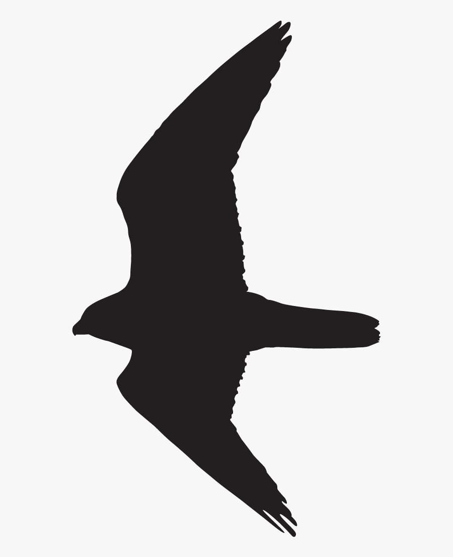 Clip Art Peregrine Overview All About - Peregrine Falcon Flight Silhouette, Transparent Clipart