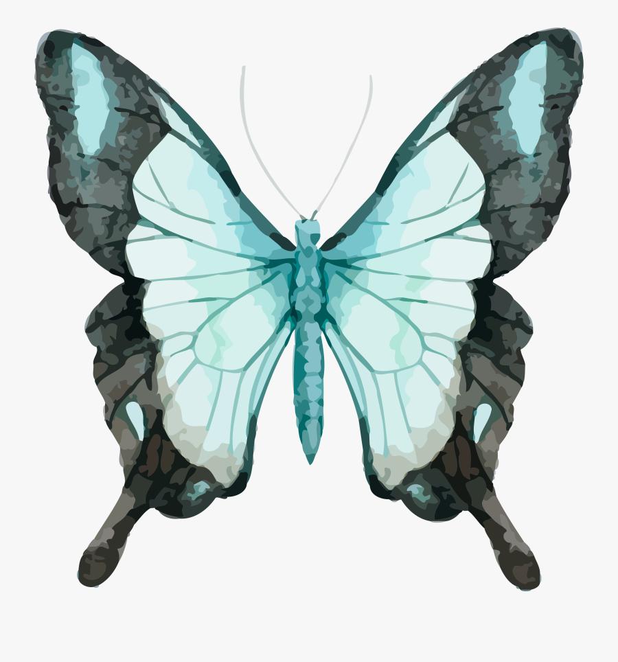 Watercolor Painting Watercolour Butterflies, Transparent Clipart