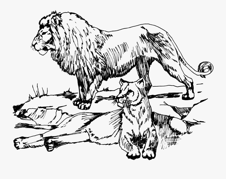 Art,monochrome Photography,carnivoran - Lions Black And White Clipart, Transparent Clipart