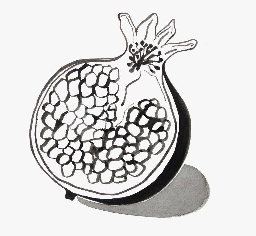 Diagram Pomegranate Drawing At Getdrawings