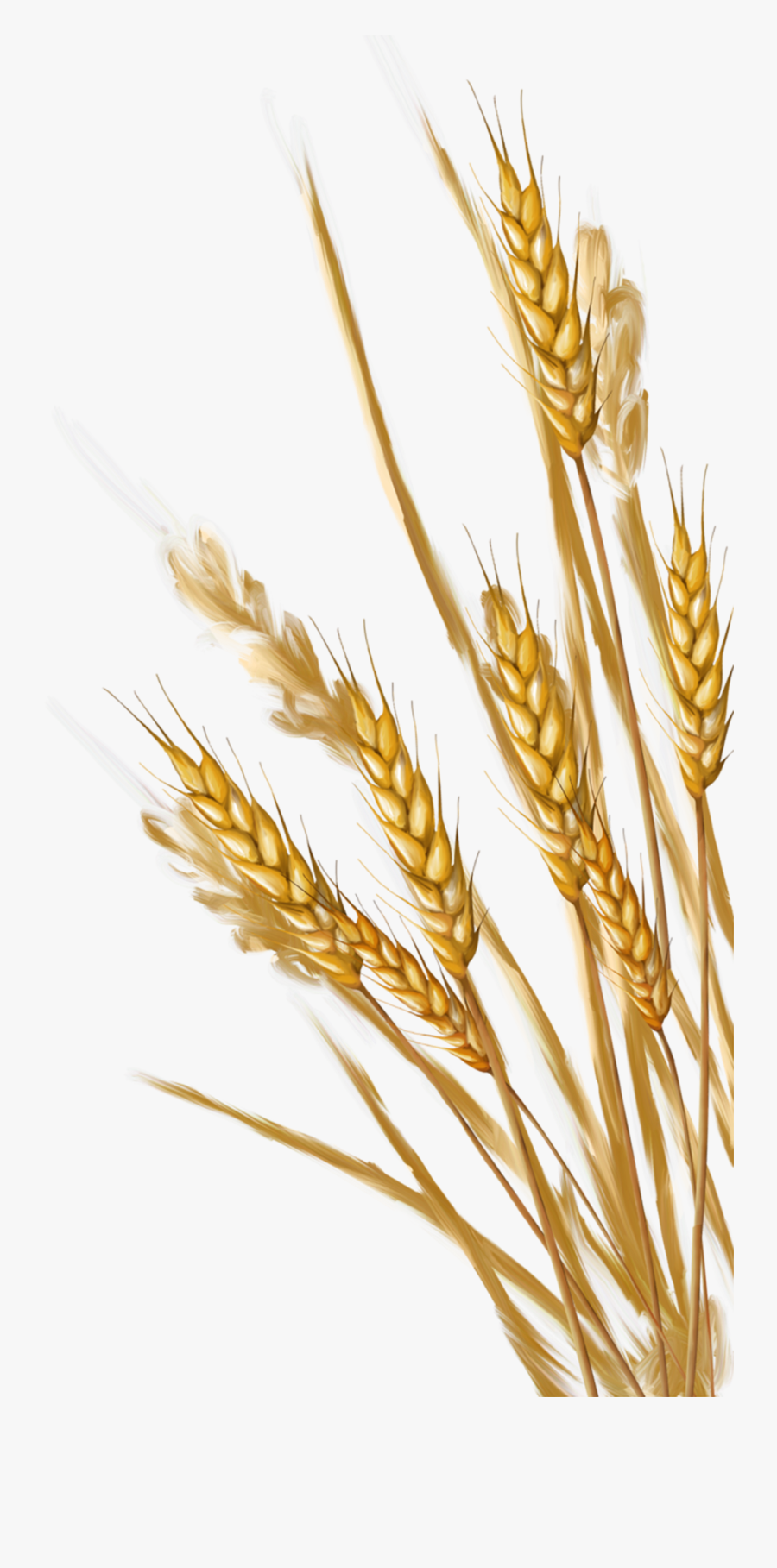 Field clipart wheat, Field wheat Transparent FREE for download on  WebStockReview 2020