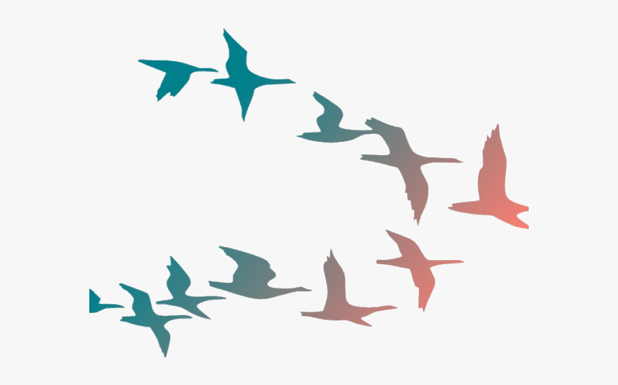 Bird Flying Birds Clipart Flock Of Cartoon Transparent Colorful Birds Flying Png Free Transparent Clipart Clipartkey