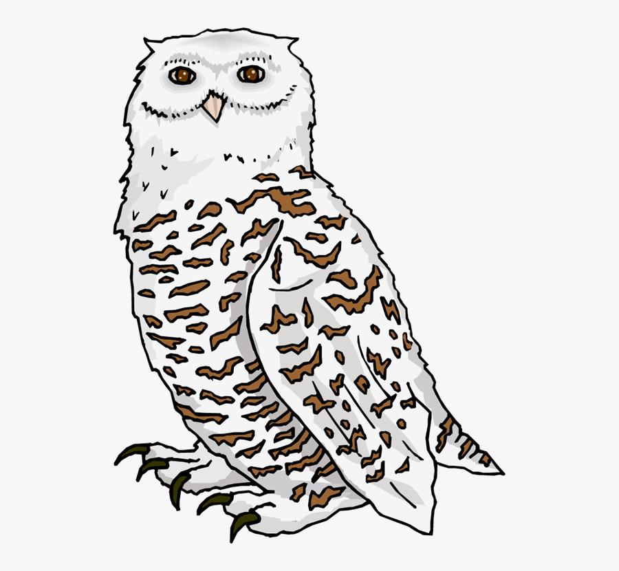 Snowy Owl Clipart Branch - Snow Owls Clip Art , Free ...