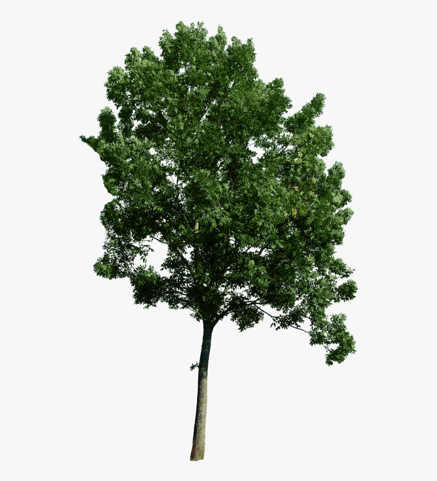 Use As A Tree Corner - Tree Png For Photoshop, Transparent Clipart