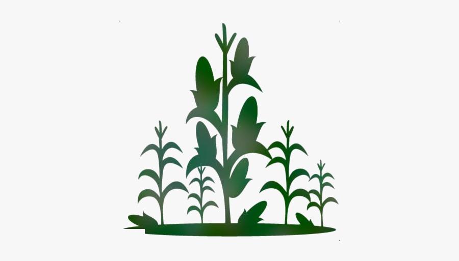 Corn Stalk Png Transparent Images - Corn Stalk Clipart, Transparent Clipart