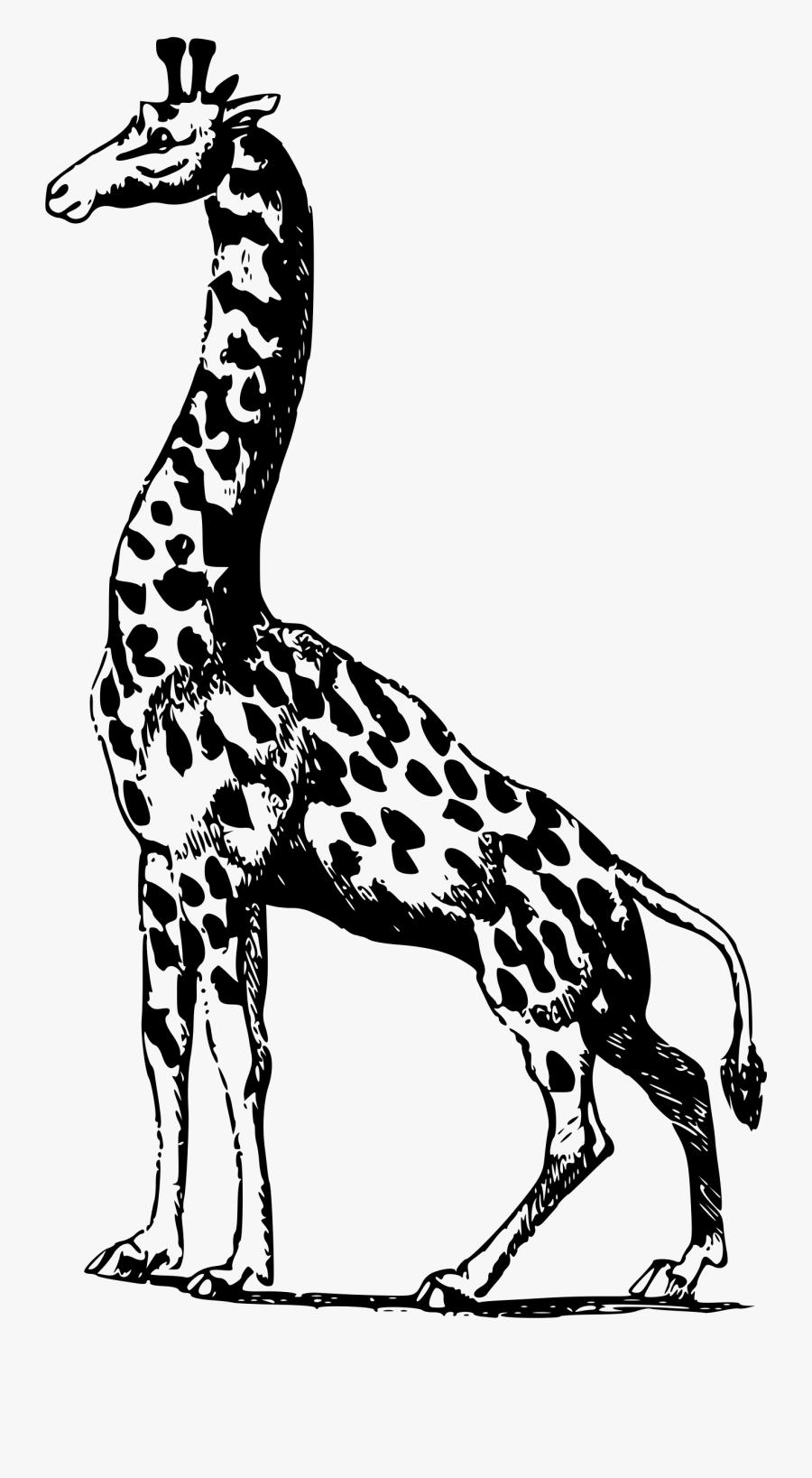 Giraffe, Transparent Clipart
