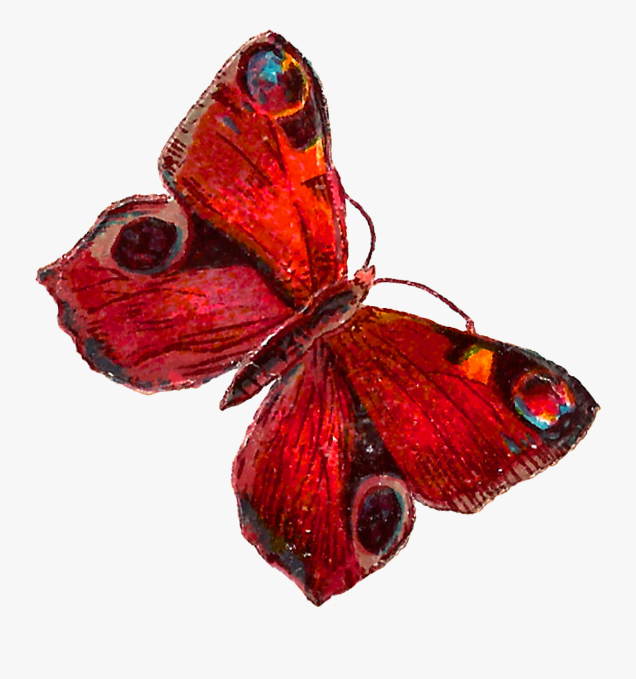 Transparent Butterfly Wings Clipart - Red Butterfly Illustration Png, Transparent Clipart