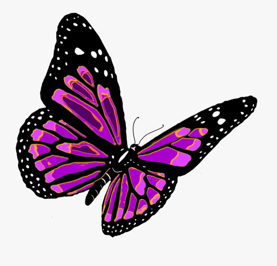 Clip Art Butterfly Freeuse Huge - Butterfly Png, Transparent Clipart