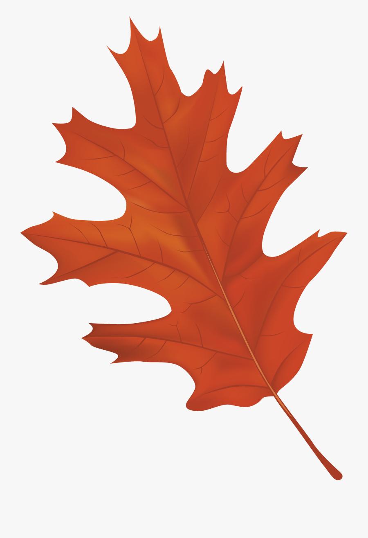 Clip Art Autumn Leaf Clipart - Autumn Leaf Clipart Png, Transparent Clipart