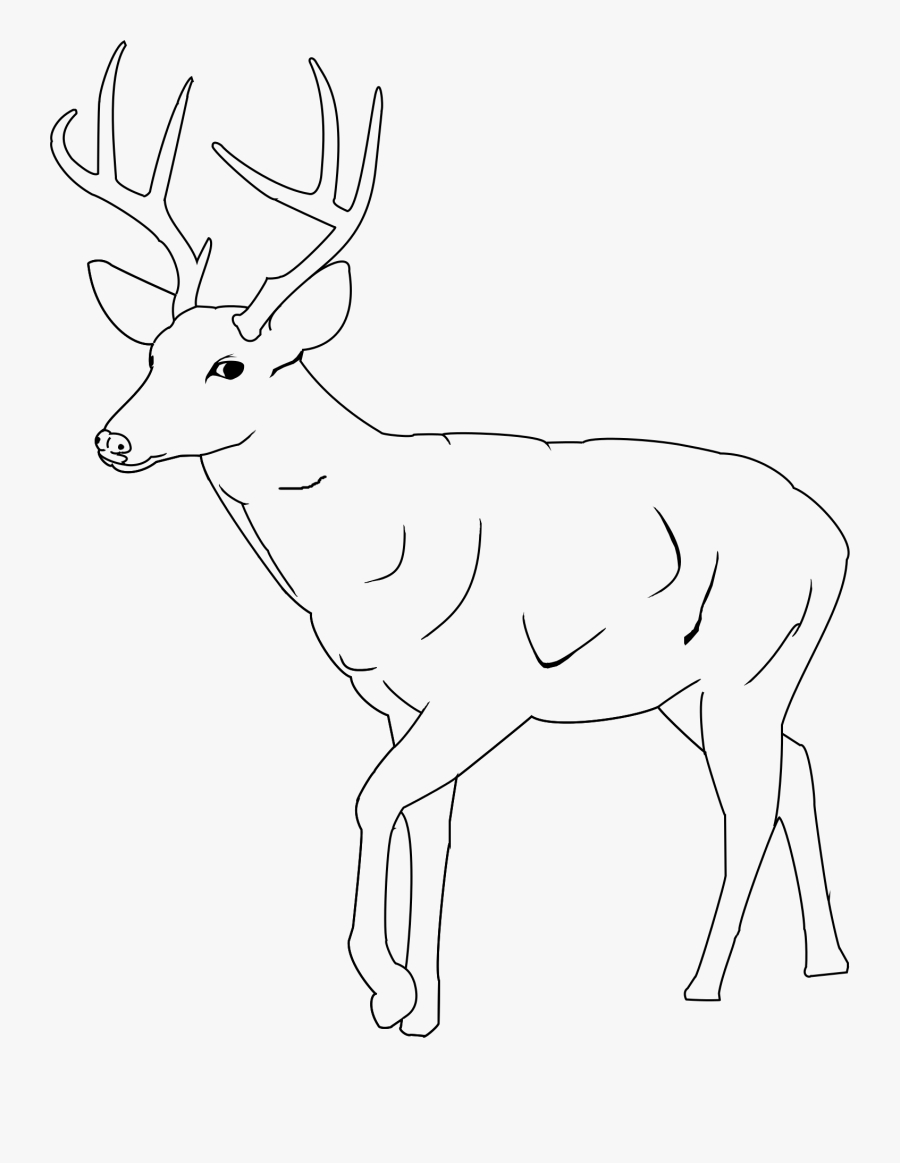 Whitetail Deer Coloring Pages 11 Easy Mule Deer Drawings Free Transparent Clipart Clipartkey