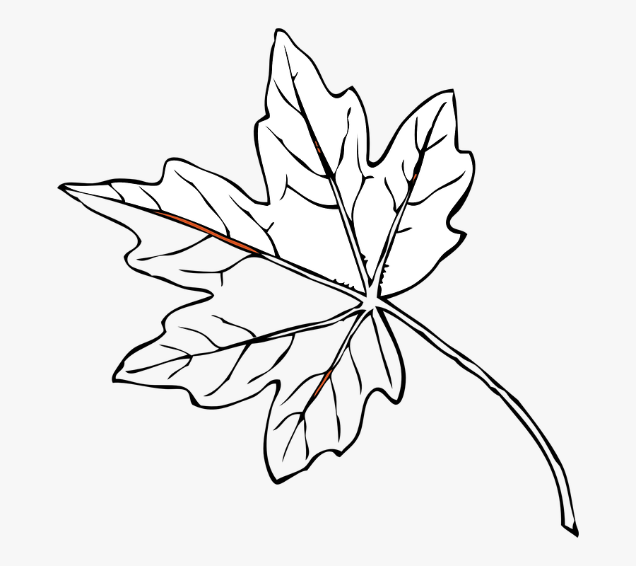 Collection Of Outline Of A Tree Drawing - Maple Leaves Black And White, Transparent Clipart