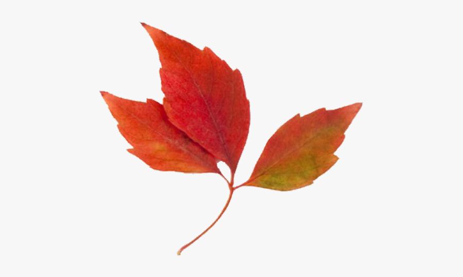 Fall Leaves Clip Art, Transparent Clipart