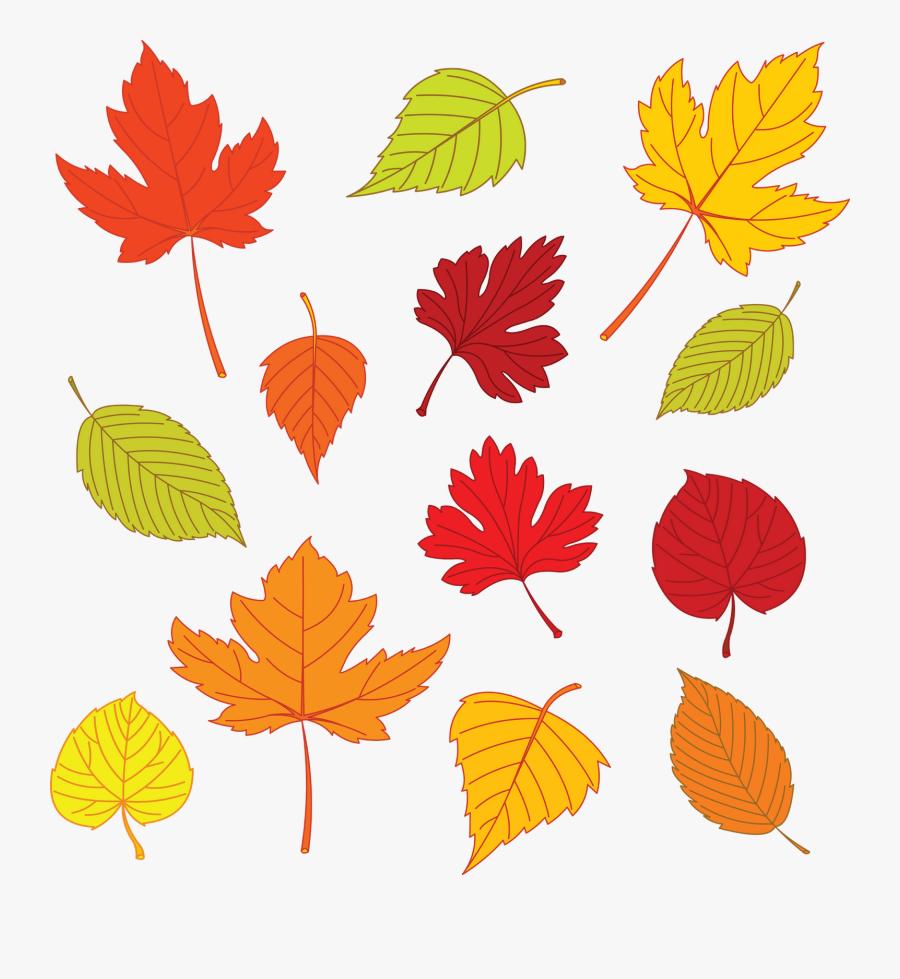 Fall Leaf Clipart Template - Autumn Leaves Illustration, Transparent Clipart