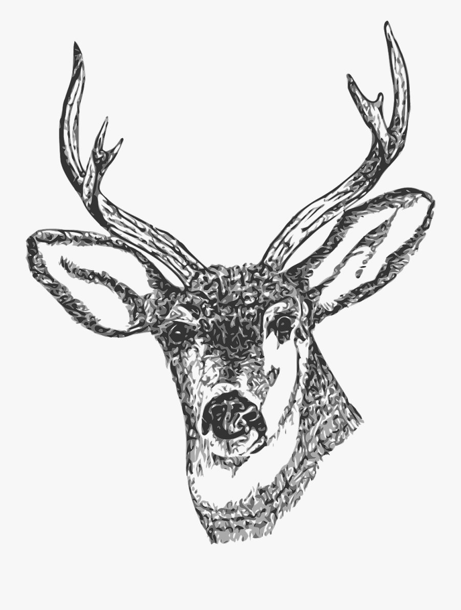 Free Clip Art Black And White Deer - Deer Clipart Transparent Background, Transparent Clipart