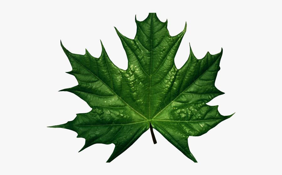 Leaves Clipart Dark Green Leaf - Green Autumn Leaves Clipart, Transparent Clipart