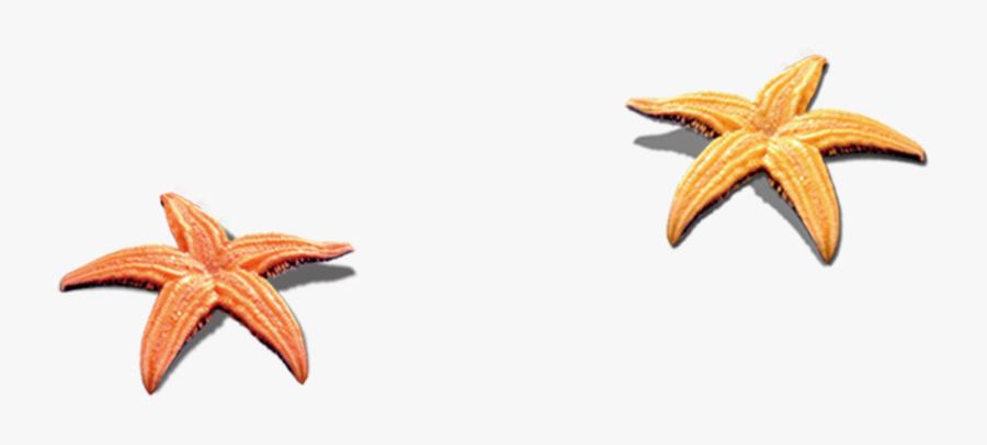 Seashell Clip Art Transprent Png Free Download - Png Transparent Beach Seashell, Transparent Clipart