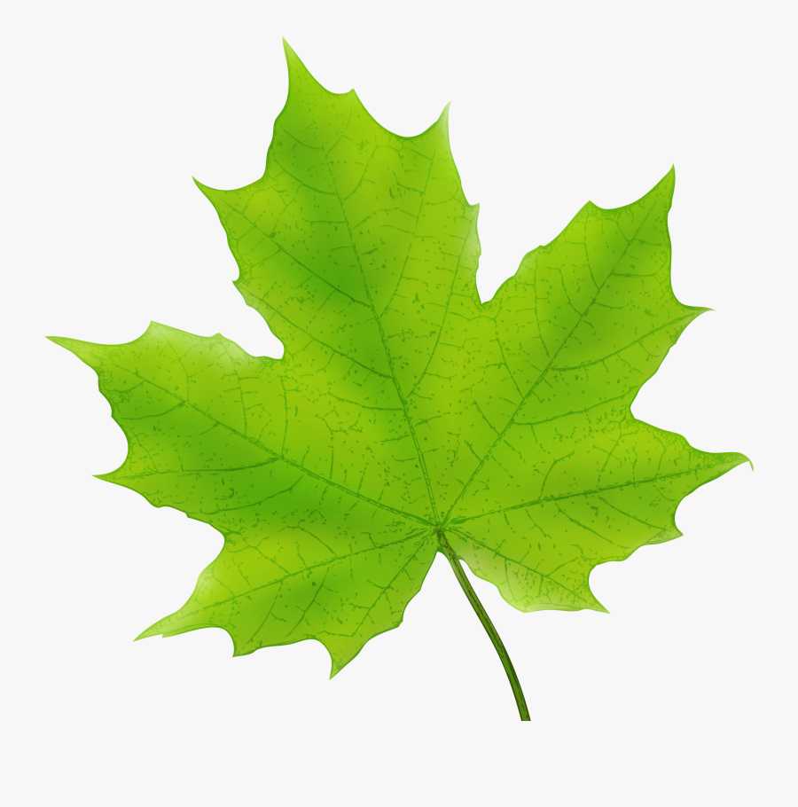 Leaves Clipart Dark Green - Green Maple Leaf Clipart, Transparent Clipart