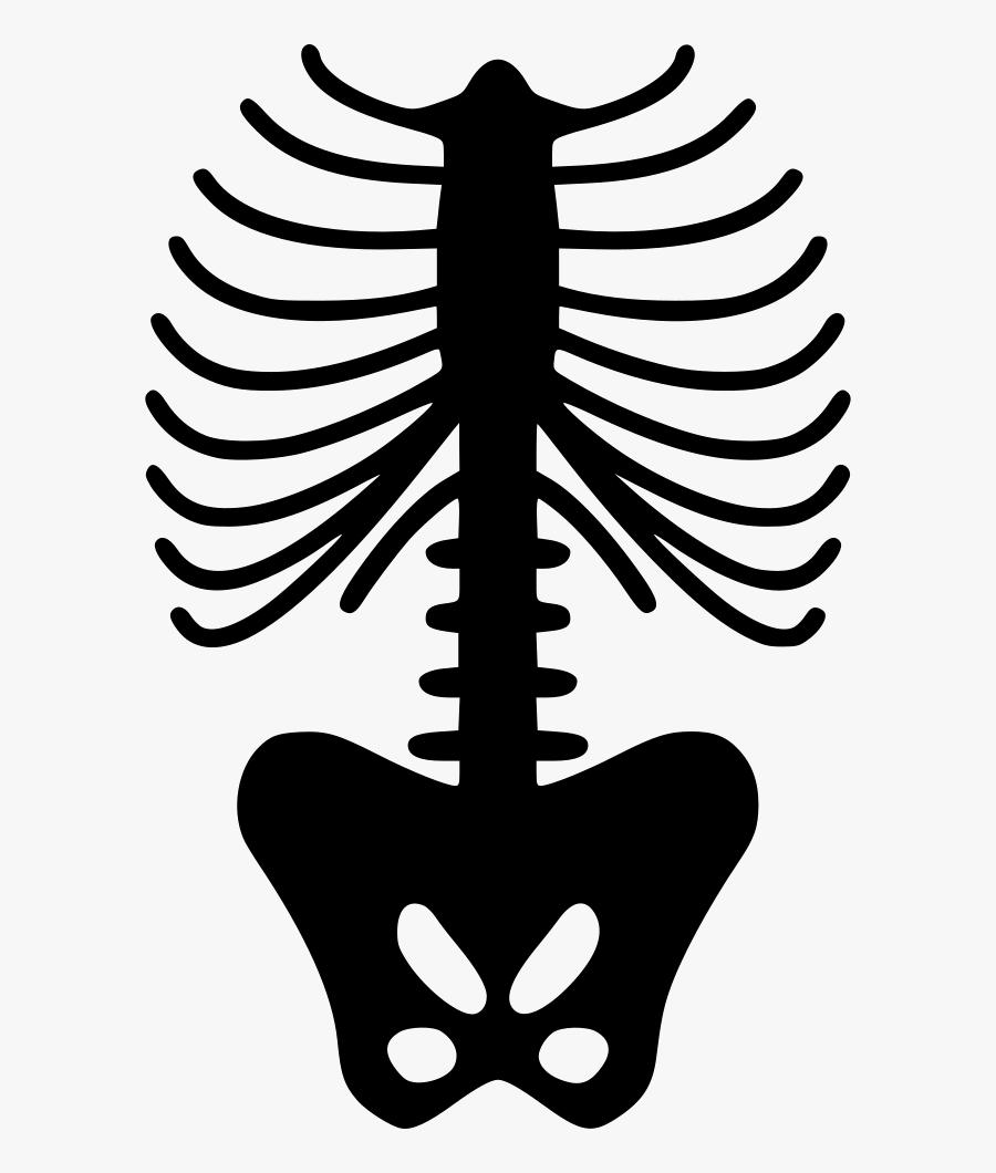 Spine Skeleton - Skeleton Ribs Png, Transparent Clipart