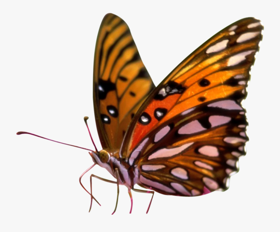 Butterfly Clipart Png Transparent - Butterflies Transparent Background Png, Transparent Clipart