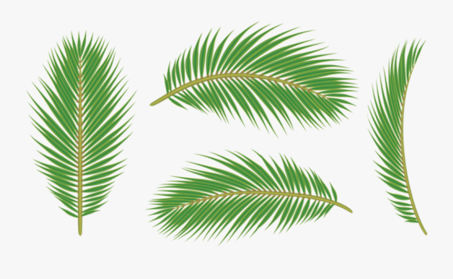 Palm Tree Leaves Png - Leaf Palm Free Png, Transparent Clipart