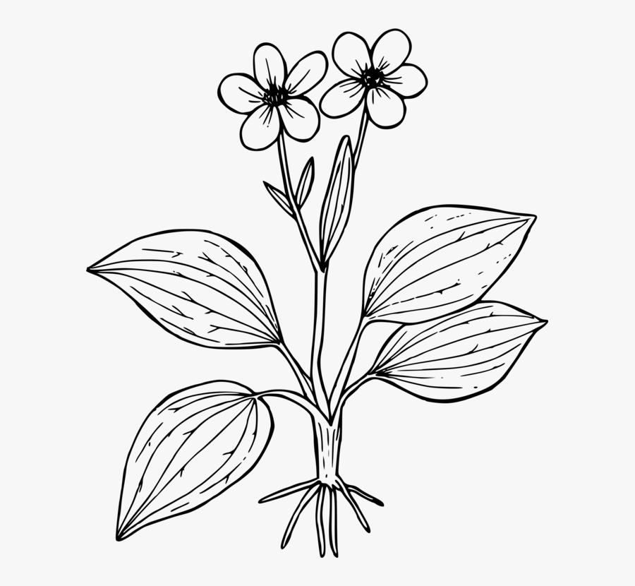 Symmetry,monochrome Photography,petal - Purple Saxifrage ...  Purple Saxifrage Drawing