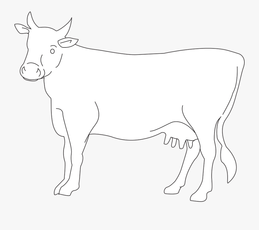 Cow, Cattle, Livestock, Farm, Animal, Beef, Dairy, - Cow Drawing Side View, Transparent Clipart
