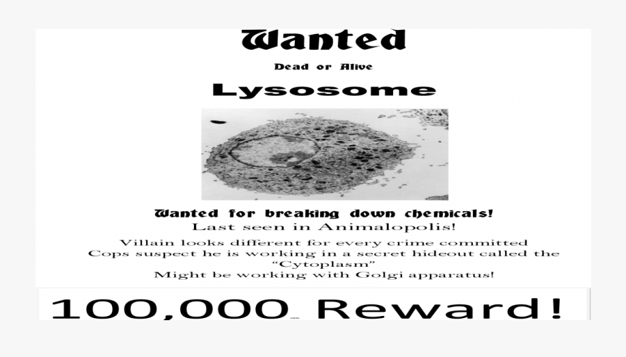 Clip Art For Lysosome Pdf Document - Lysosomes Wanted, Transparent Clipart