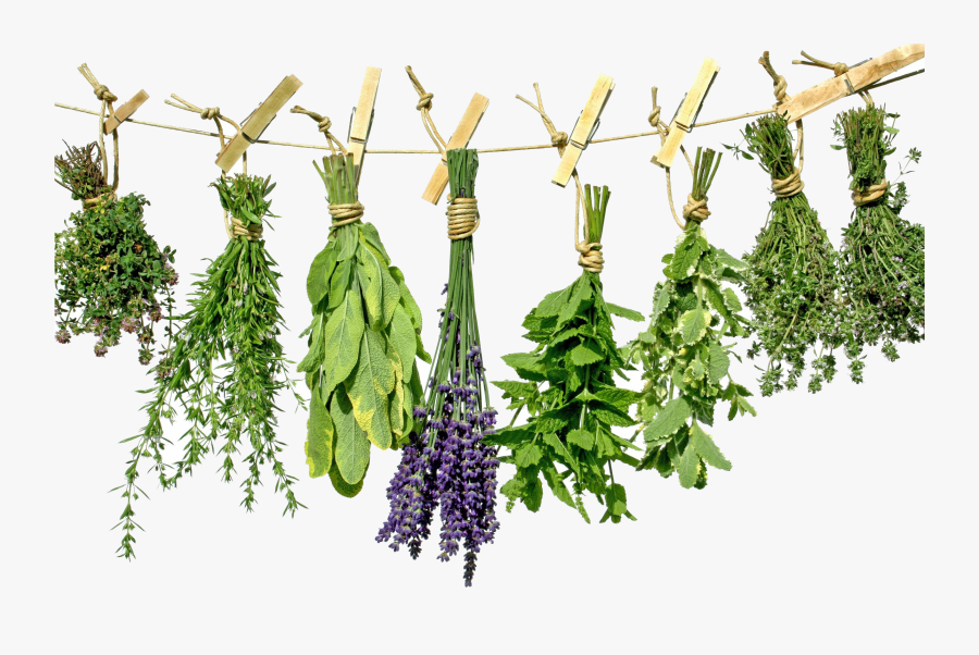 Transparent Herbs Clipart - Sims 4 Hanging Herbs, Transparent Clipart