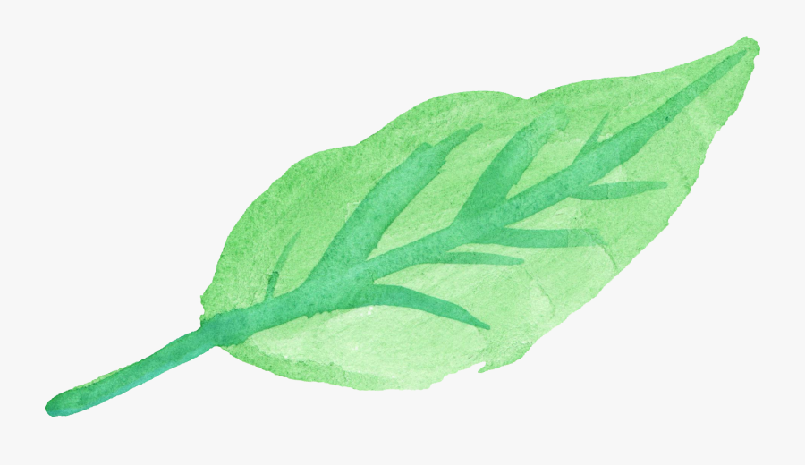 Spinach Clipart Basil Leaf - Leaf Water Color Png, Transparent Clipart