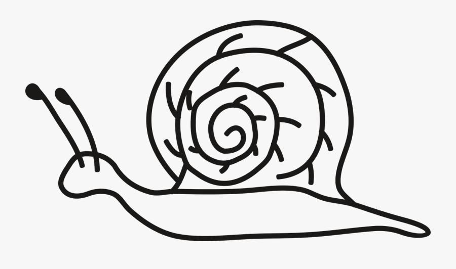 Gambar Siput Kartun Hitam Putih Free Transparent Clipart Clipartkey