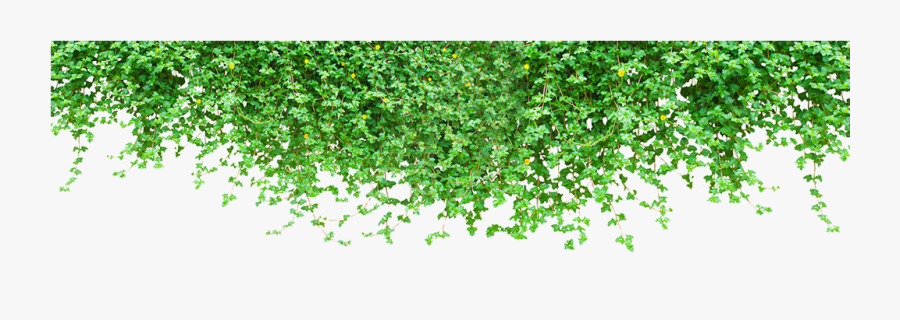 Plant Wall Vine Tiger Green Climbing Clipart - Wall Plant Png, Transparent Clipart