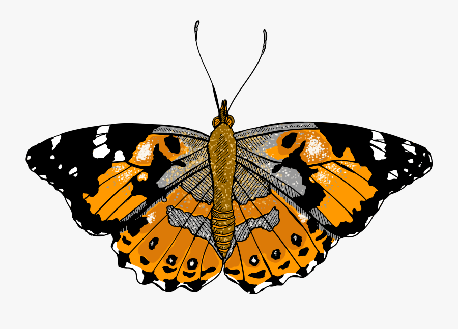 Monarch Clipart Painted Lady - Illustration, Transparent Clipart