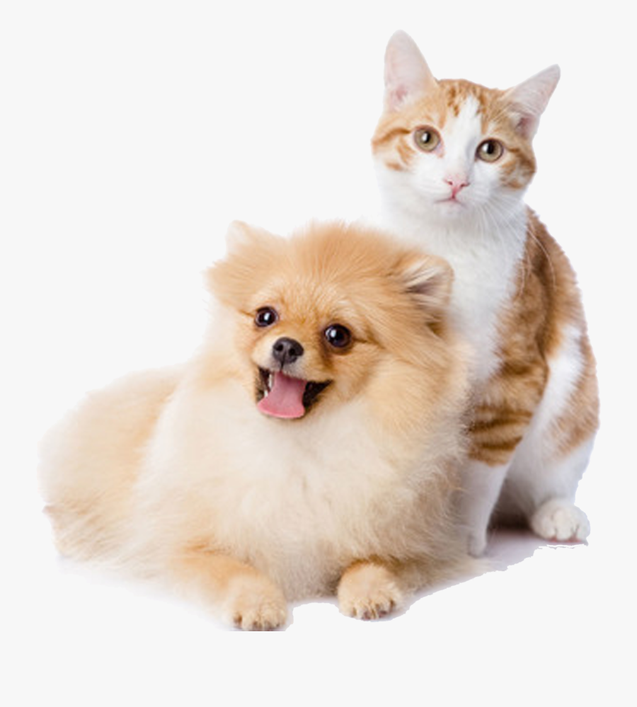 And Play Pet Kitten Dog Cat Cats Clipart - Dog And Cat Png, Transparent Clipart