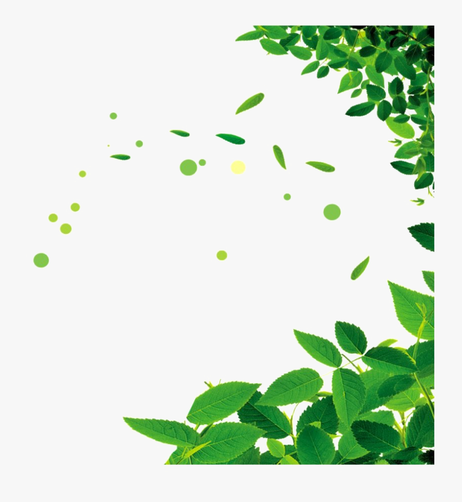 Green Leaves Png Picture - Green Leaves Png, Transparent Clipart