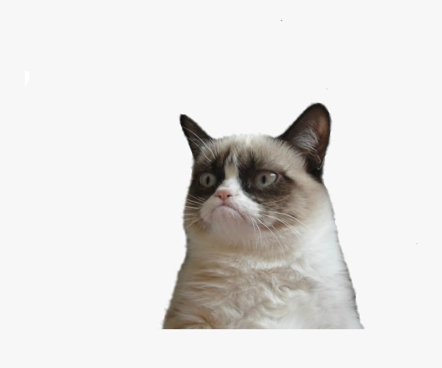 Grumpy Cat Snowshoe Cat Manx Cat Clip Art - Grumpy Cat Face Png, Transparent Clipart