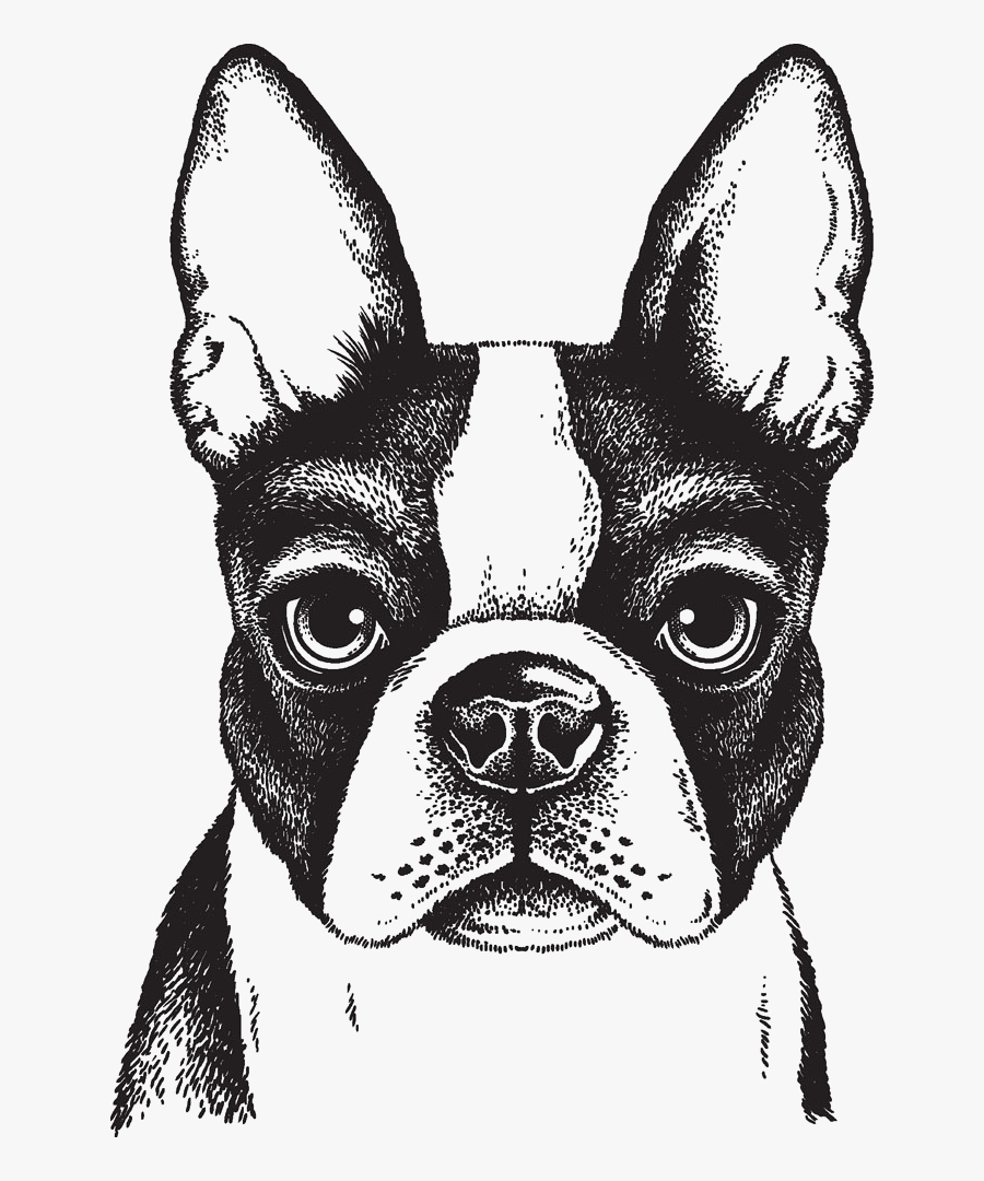 Dog,mammal,boston Group,french Bulldog,companion Dog,whiskers,ancient - Boston Terrier Head Drawing, Transparent Clipart
