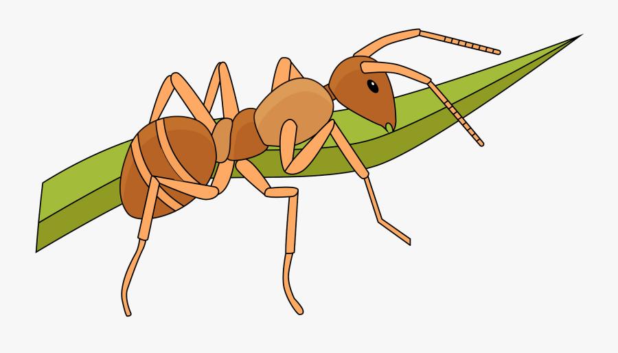 Ant, Transparent Clipart