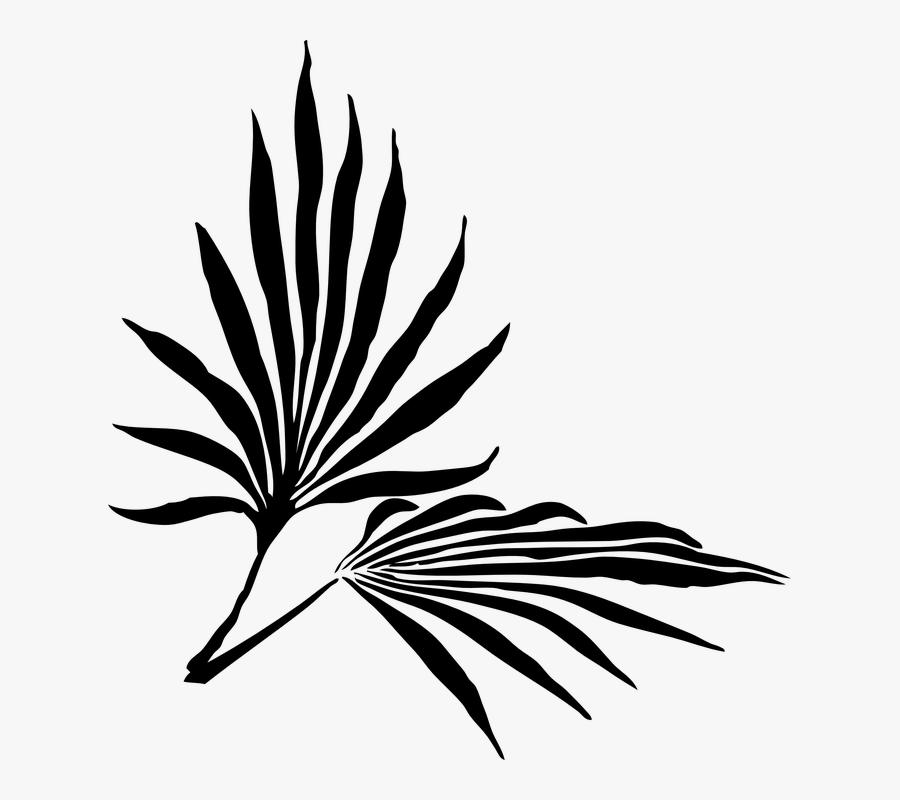 Palm Sunday Clipart Kid - Palm Frond Clip Art, Transparent Clipart