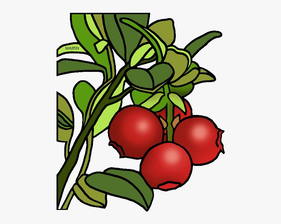 Massachusetts State Berry - Cranberry Clipart Transparent, Transparent Clipart