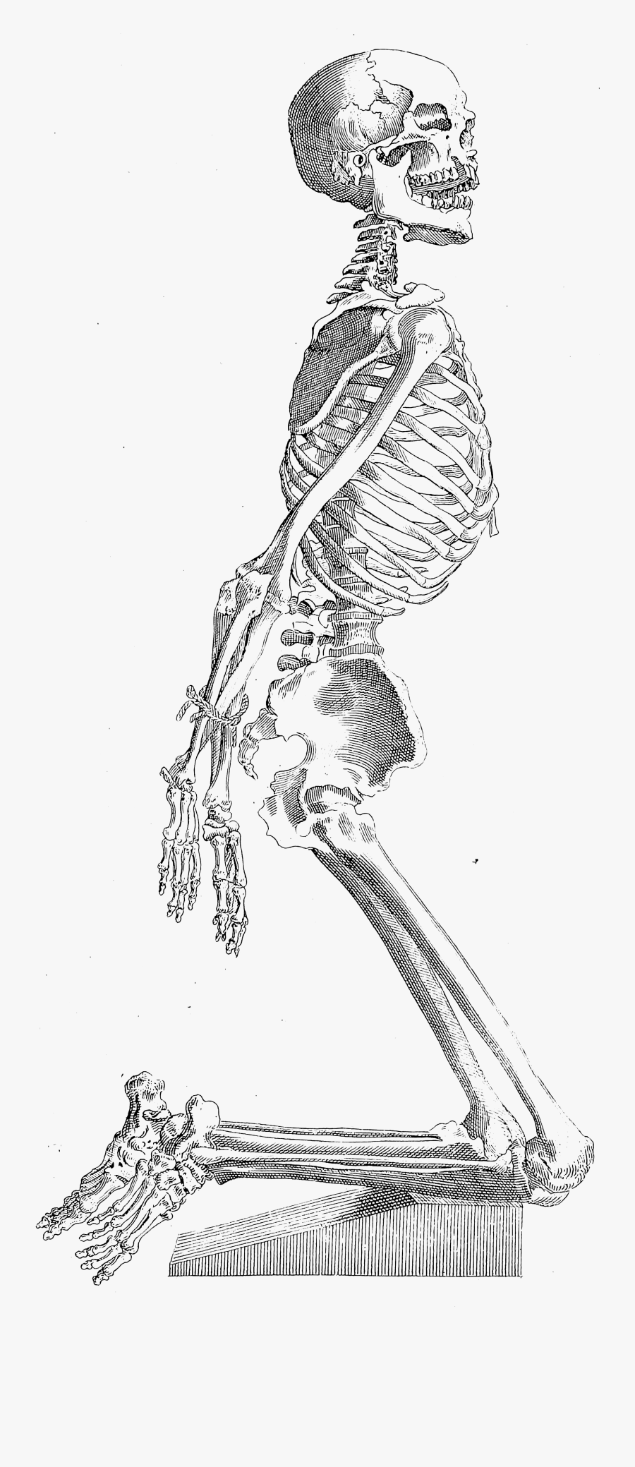 Old Print Art Unsorted Full Body Skeleton Drawing Free Transparent Clipart Clipartkey