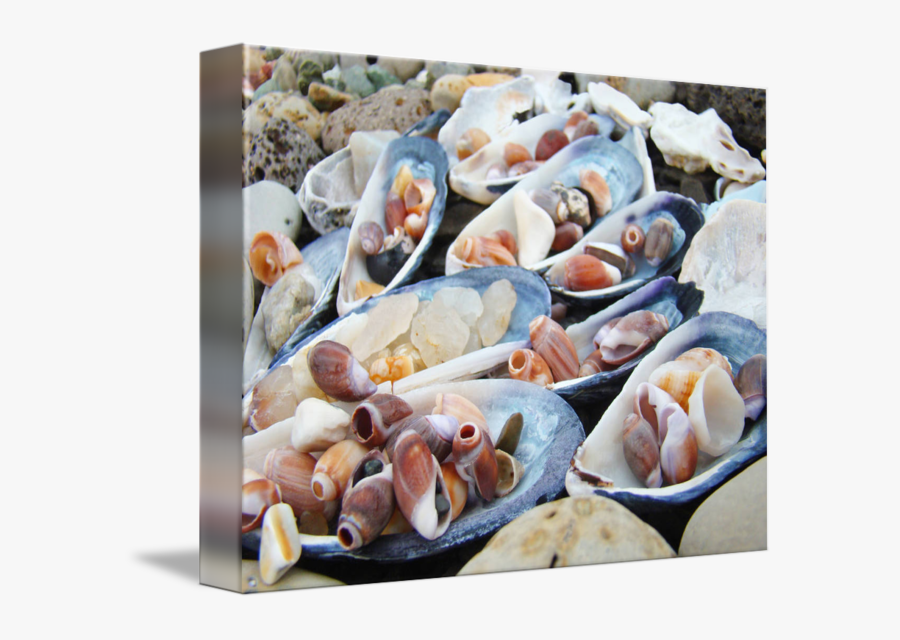 Clip Art Prints Coastal Beach Decorative - Mussel, Transparent Clipart