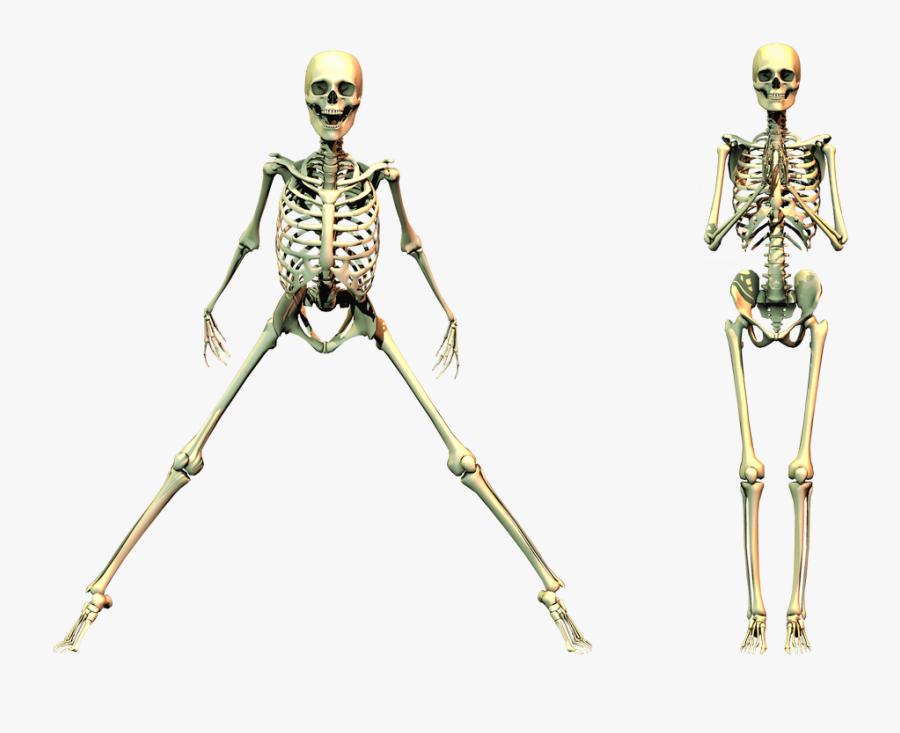 Spooky Skeleton Png Clipart - Skeleton Png, Transparent Clipart