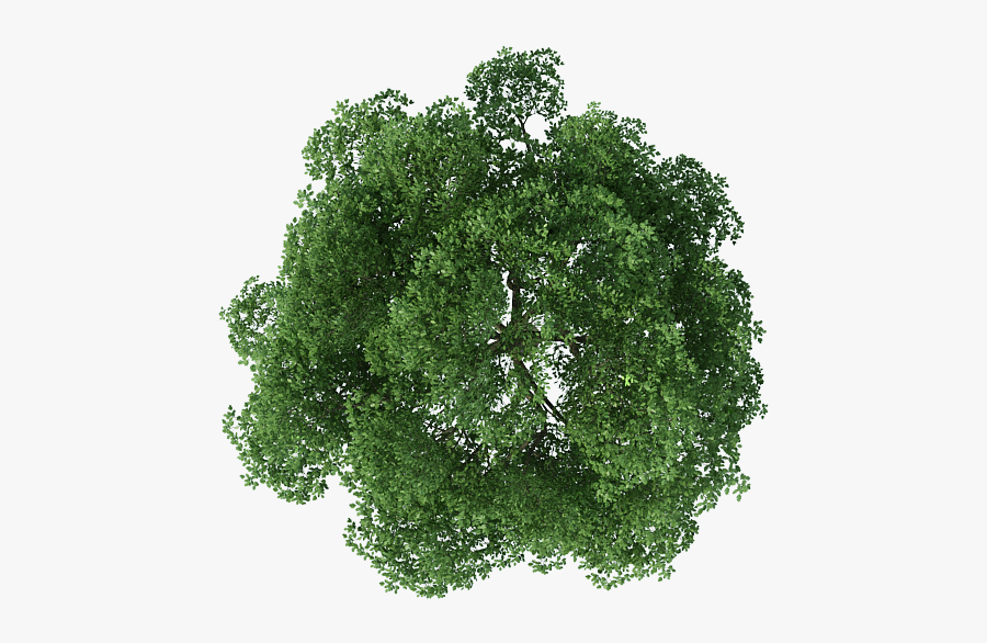 Rendering Top Tree View Download Free Image Clipart - Transparent Background Trees Top View Png, Transparent Clipart