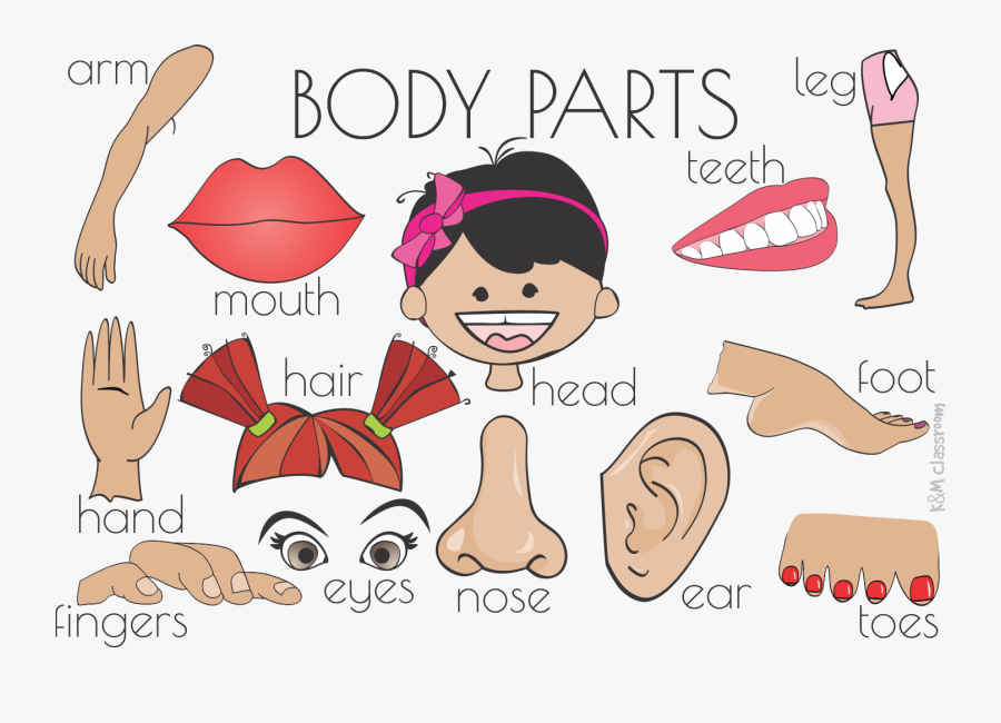 Clip Art Cartoon Body Part Flash Cards Parts Of The Body Printable Free Transparent Clipart Clipartkey
