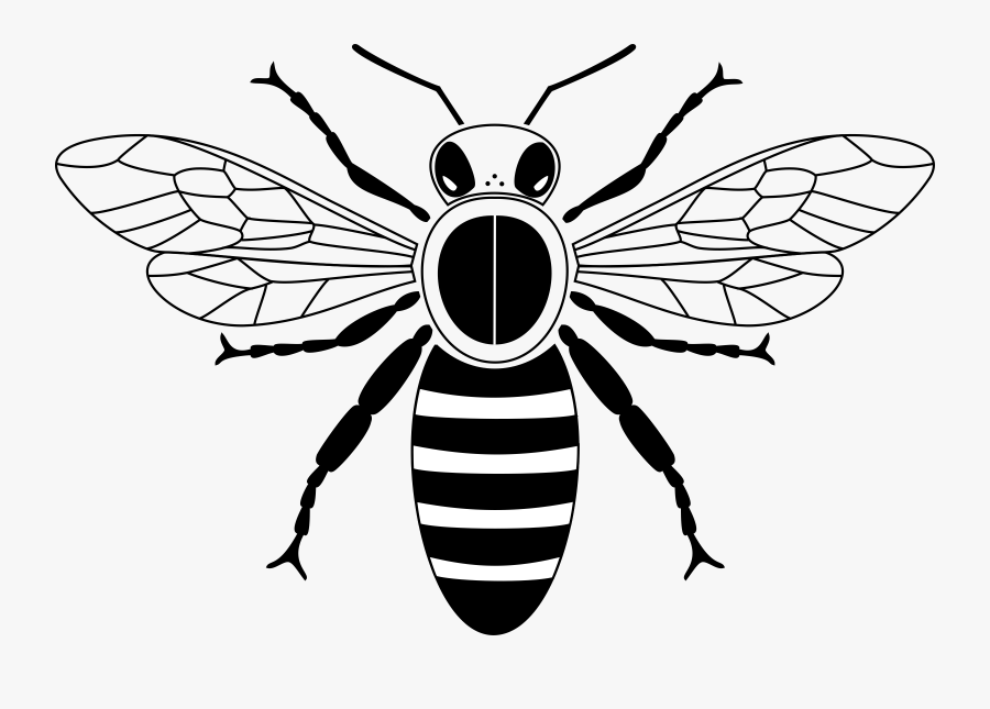 Download Graphic Free Stock Abc Clipart Free Club Image - Clip Art Black And White Honey Bee, Transparent Clipart